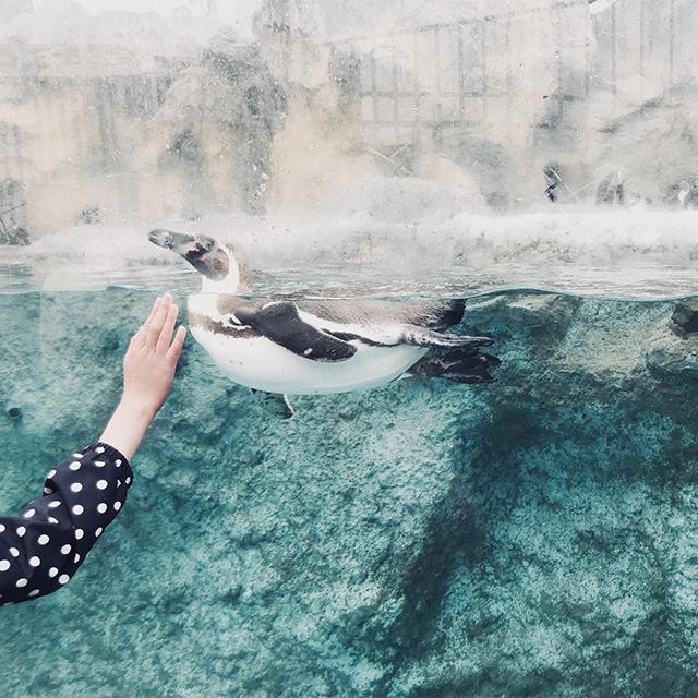 おでかけイベント:海響館